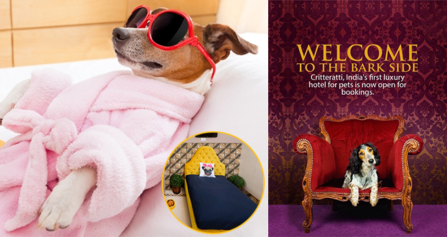 The Mind behind India's first Pet Hotel; Pampered pooches and treated them well