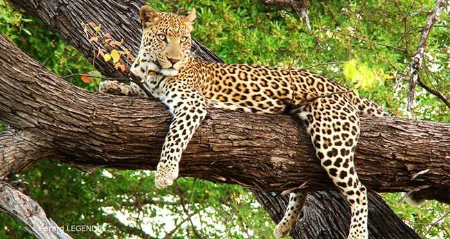 Pics: Inside India's Oldest Forest Reserve – Bori Wildlife Sanctuary