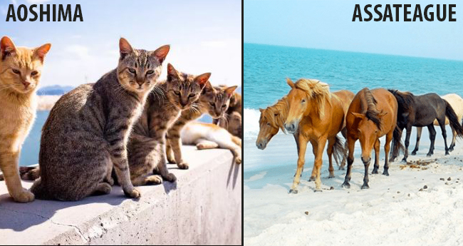 4 Strange Islands from all over the globe reigned by lovable animals