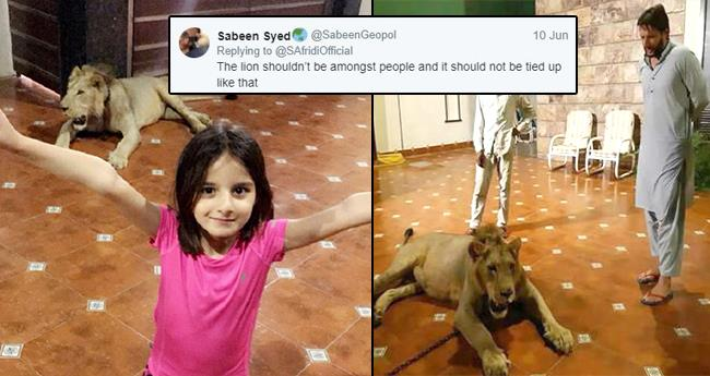 Cricketer Shahid Afridi has chained a lion at home, Tweeps ask to free it to its natural habitat