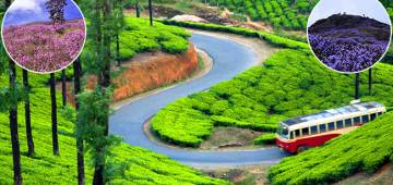 After A Gap Of 12 Years, Neelakurinji Is Blooming, And Munnar Is All Set To Welcome Tourists