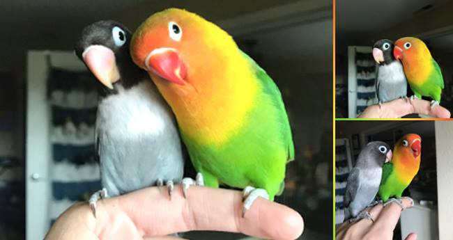 Cute Love Story Of Lovebirds Proves That Everyone Has A Soulmate Out There