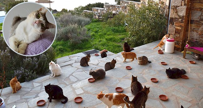 A Cat Sanctuary Is Looking For A Candidate Who Can Live on A Greek Island And Take Care Of 55 Cats