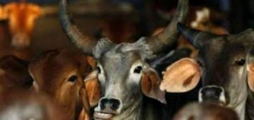 Cowdung made beauty products are now being sold on Amazon in reasonable prices