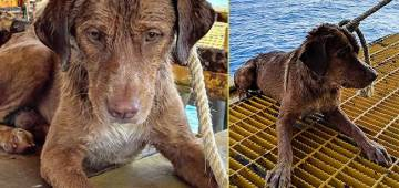 Oil Rig Workers Rescued a Dog Who Swam 135 Miles Away from Thailand Coast