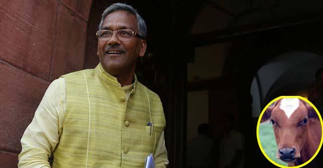 Cow inhales and exhales oxygen, massaging it treats breathing troubles, says UttaraKhand CM
