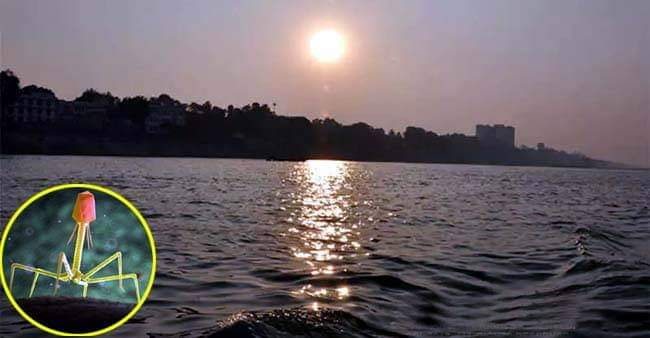 Bacteriophages present in Ganga-Yamuna water can treat infections & ailments