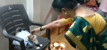 Video of Indian woman putting 'tilak' on a 'cat wearing dress' goes popular; Twitterati Reacts