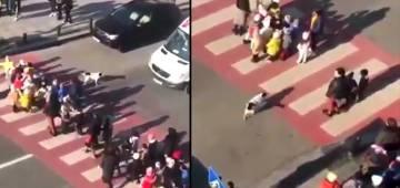 Stray dog praised to help kids crossing road video goes viral.