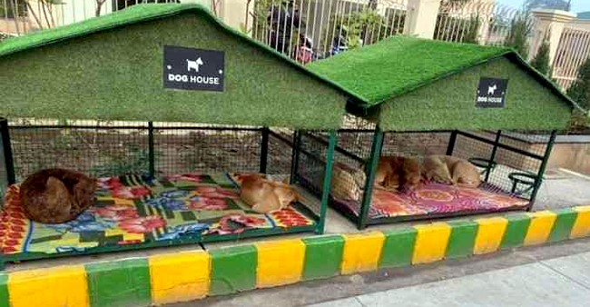 Ghaziabad Society Sets Perfect Example Of Humanity By Making Special Shelters For Strays