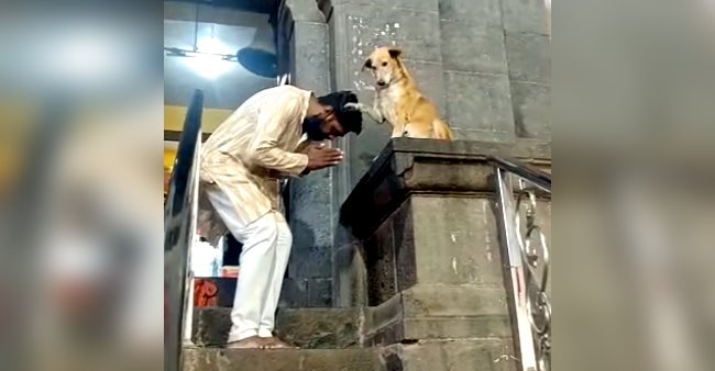 Devotees Seek Blessings From A Dog In A Temple In Maharashtra