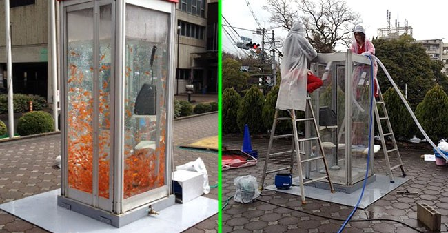 Osaka Lanes See Old Phone Booths Converted Into Goldfish Tanks
