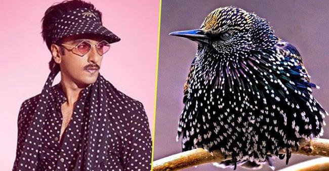 Ranveer Singh Gets Remodeled As Beautiful Indian Birds; Netizens Go Gaga As Pics Go Viral