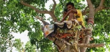 """A student from Telengana isolates on a tree after testing COVID positive: """"There was no isolation centre here"""""""