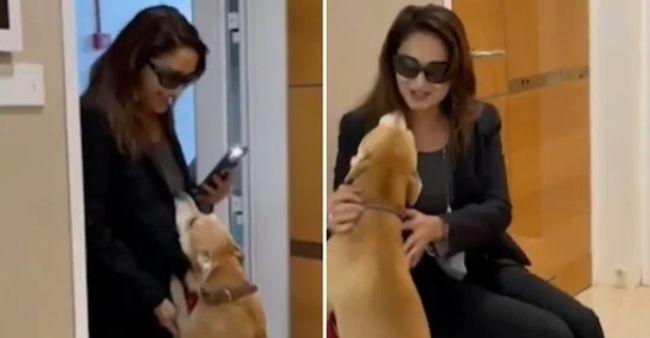 माधुरी दीक्षित का पालतू कुत्ता, कार्मेलो, घर आने पर उनका गर्मजोशी से स्वागत करता है। वीडियो देखना
